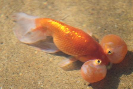 Strange_fish