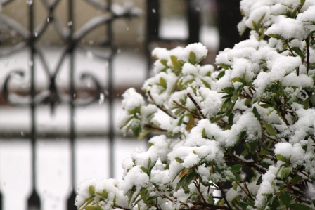 Snow_again